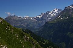 Alpschele