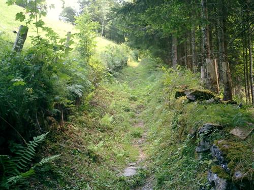 Der Abstieg nach Linthal durch den Wald: Immer noch steil