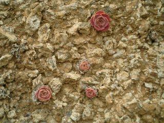 Stone roses?