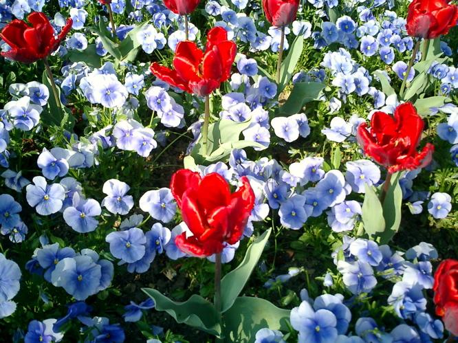 Blumenme
