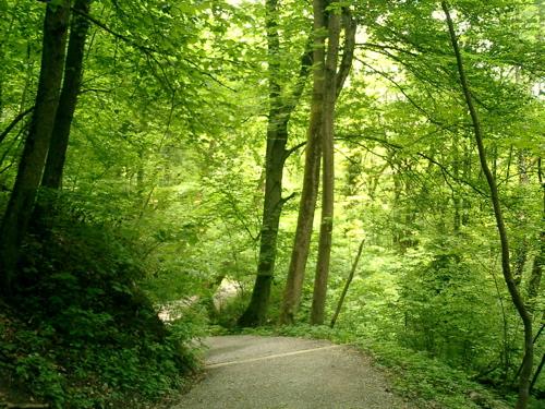Der Üetlibergwald ist grün...